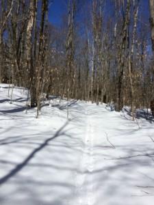 Back Country Ski Trail