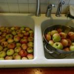 Apples everywhere!