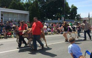 The Strolling of the Heifers Parade kicks off my summer calendar. Deborah Lee Luskin, photo